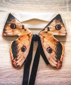 saturnia pyri col papillon